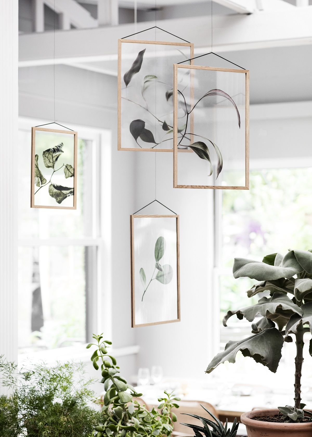 moebe hangende planten